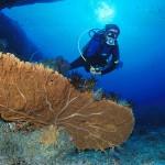 Diver and Gorgonia - Scuba Diving in Phuket