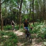 Rubber plantation in Koh Yao Noi