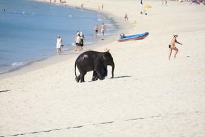 Bang Tao Beach empfohlen von Easy Day Phuket