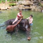 Elephant Bathing with Kapong Safari Tours