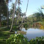 Phuket Island Hopping Tours - Raya Yai Island