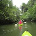 Krabi Tours -Kayaking fun