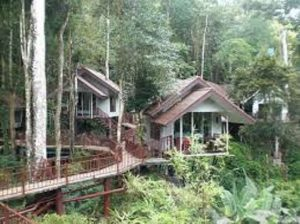 Khao Sok Treehouse Tour