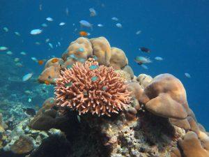 Phang Nga bay and Phi Phi Island tour